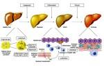 Как вывести алкогольные токсины из крови?