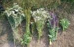 Лекарственные травы в борьбе с курением