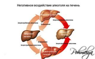 Как восстанавливается печень после алкоголя: способы помочь органу