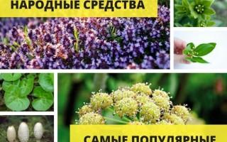 Травы от алкоголизма — рецепты приготовления отваров, настоек, чаев и способы их применения