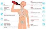 Как алкоголь влияет на организм человека — токсическое воздействие на органы и системы