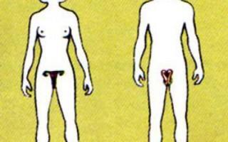 Влияние алкоголя на репродуктивную систему человека