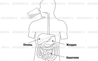 Влияние алкоголя на тонкий кишечник