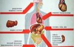 Разрушительное действие алкоголя на организм